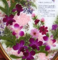 moji_om0071_image4.jpg